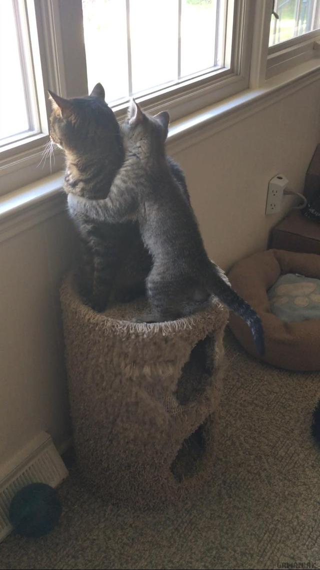 deux-chats-profitent-vue