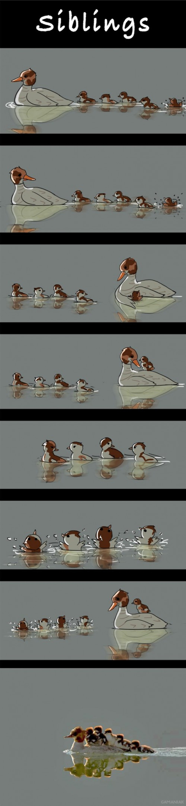 jalousie-freres-soeurs-illustree-canards