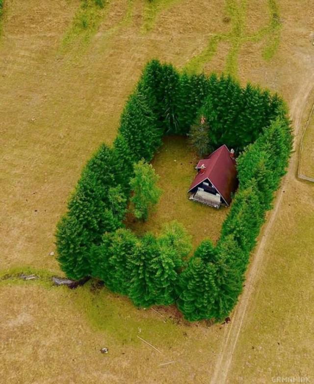 maison-entouree-arbres