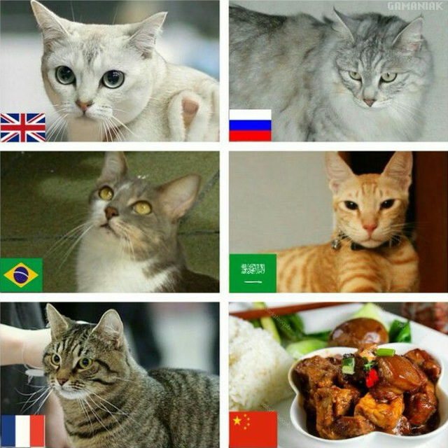 chats-differents-pays