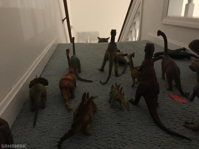 chat-bloque-escaliers-dinosaures