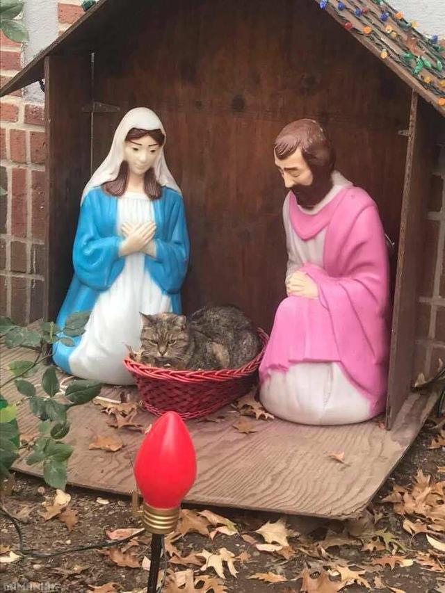 jesus-fourrure