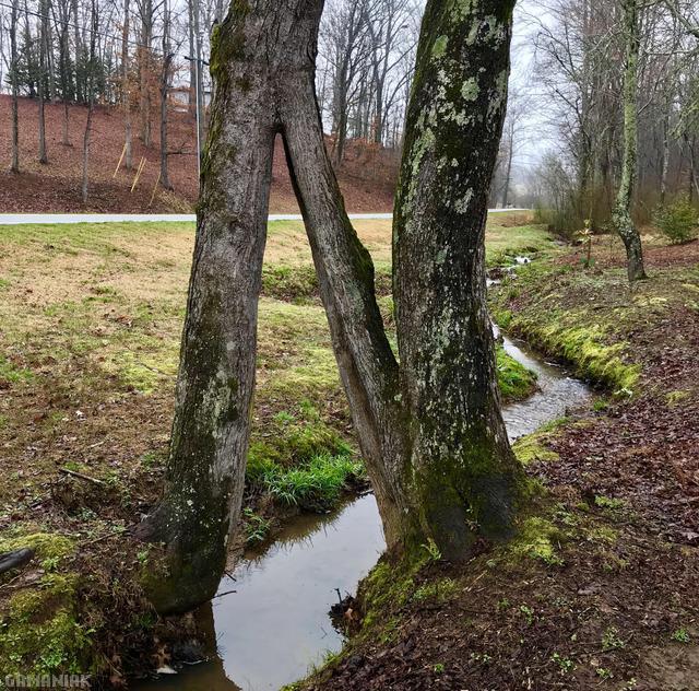 arbre-pousse-2-cotes-riviere