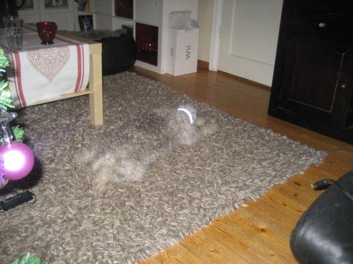 Les images choc et marrantes Gamaniak.com_chien-camoufle