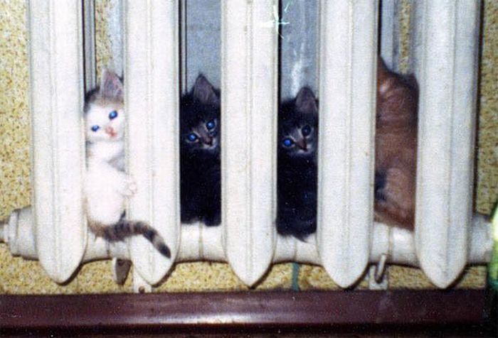 chatons-chauffage