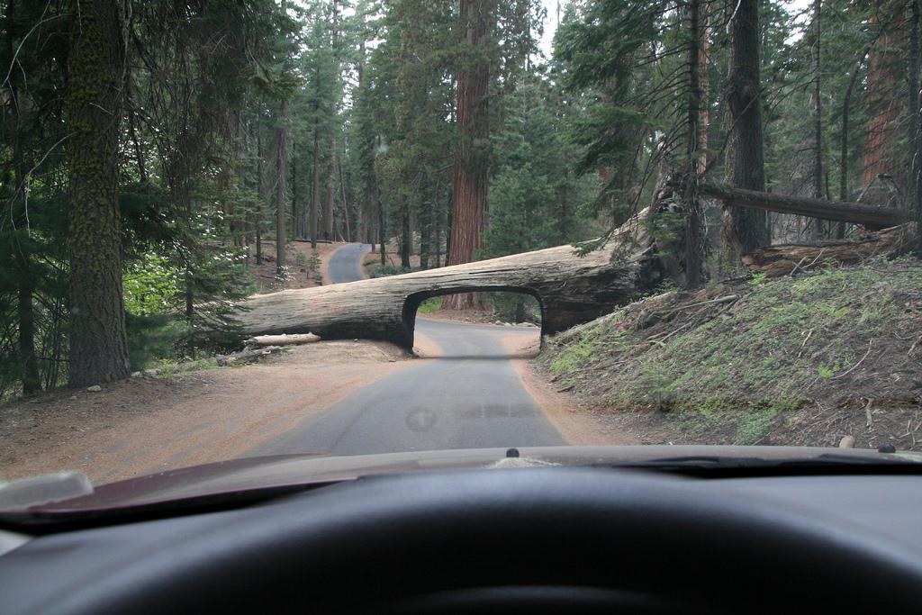un-pont-sous-un-arbre