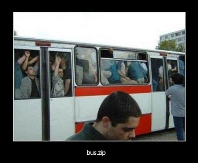 buz-zip