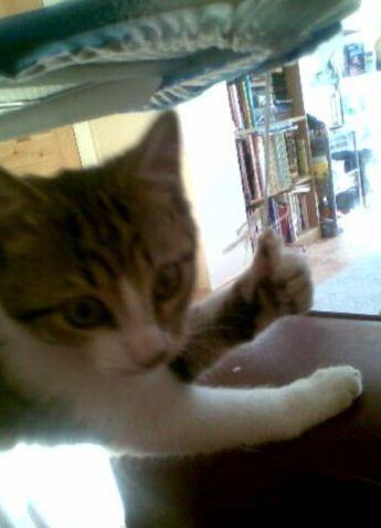 chat-voie-libre