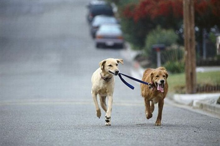 chien-promene-autre