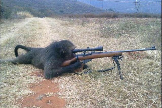 chimpanze-sniper