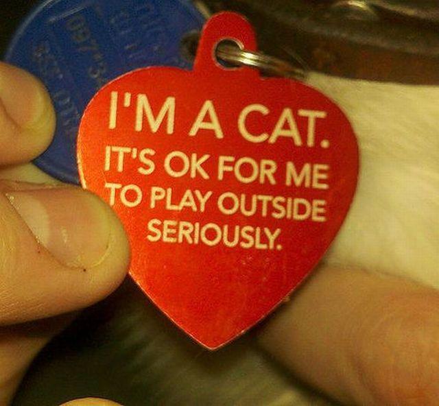 chat-je-peux-jouer-dehors