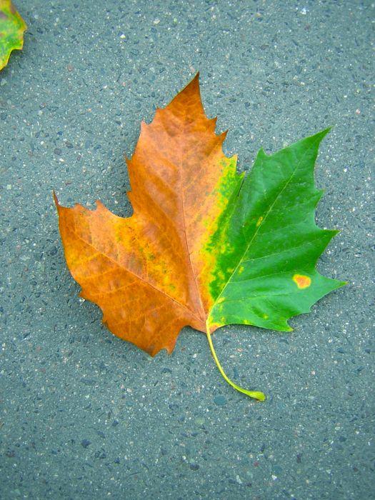 feuilen-automne-ete