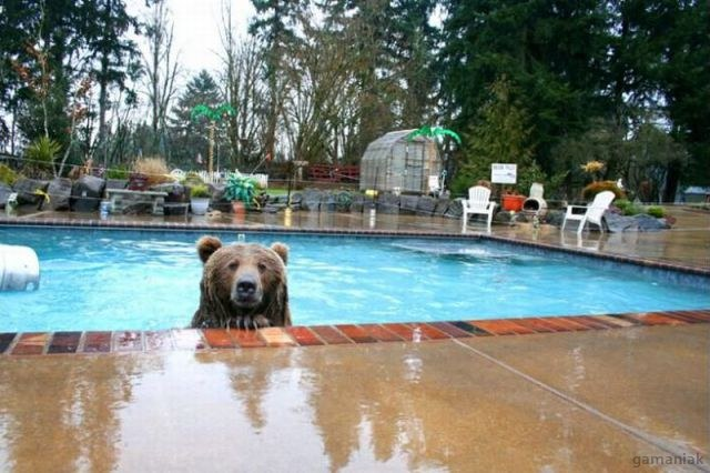 ours-piscine-serviette