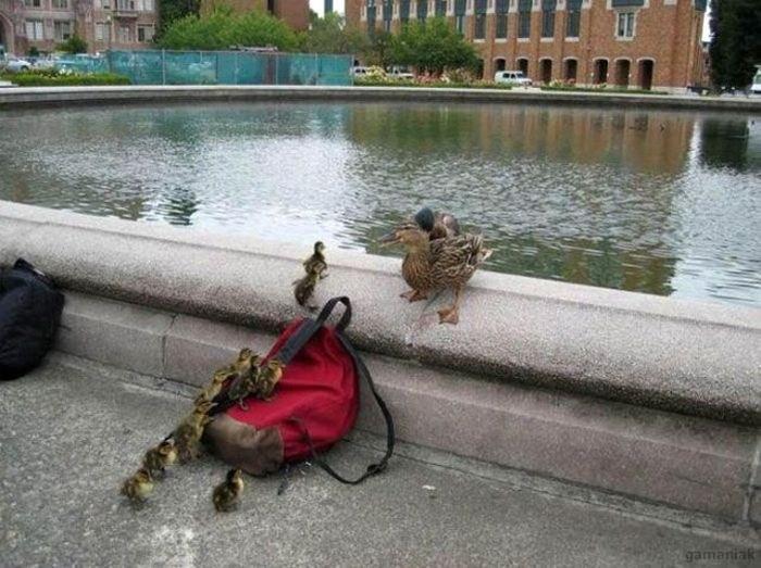 votre-sac-peut-aider-canards