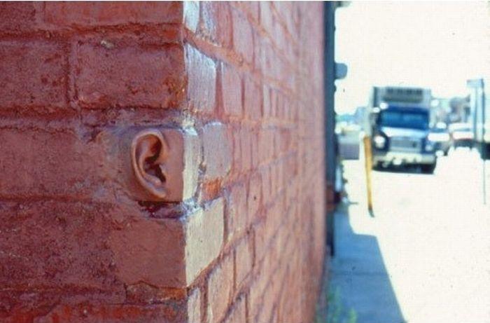 murs-oreilles