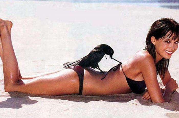 corbeau-pervers-defait-bikini