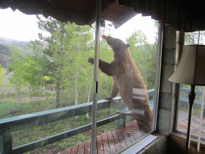 ours-vole-coca