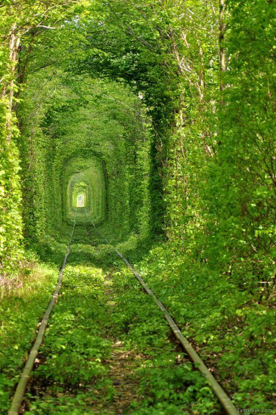 tunnel-naturel-vert