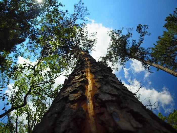 arbre-eclair