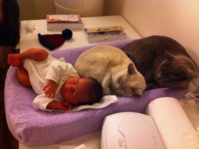chats-dorment-dans-bebe
