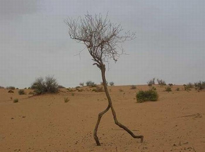 arbre-marche