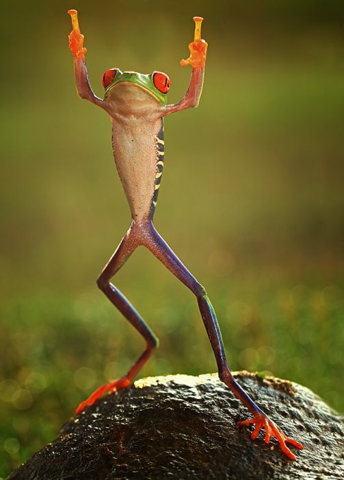 grenouille-fuck-yeah