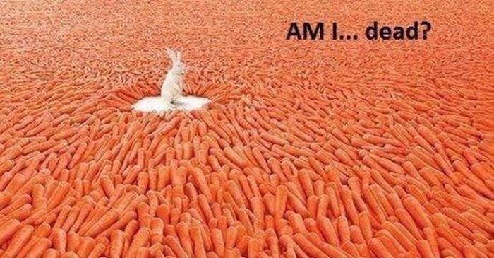 lapin-paradis-carottes