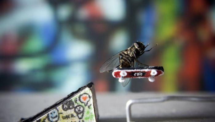 mouche-skateboard