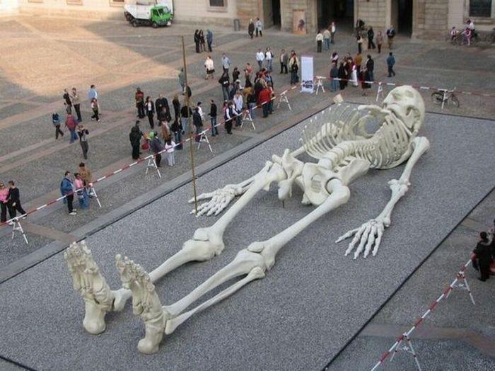 squelette-geant