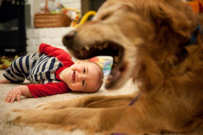chien-mange-tete-bebe
