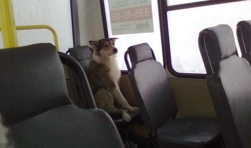 chien-prend-bus