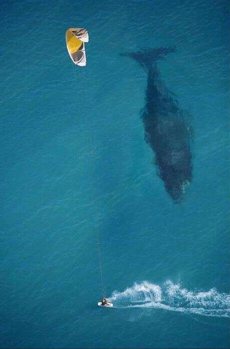 baleine-sous-surfeur