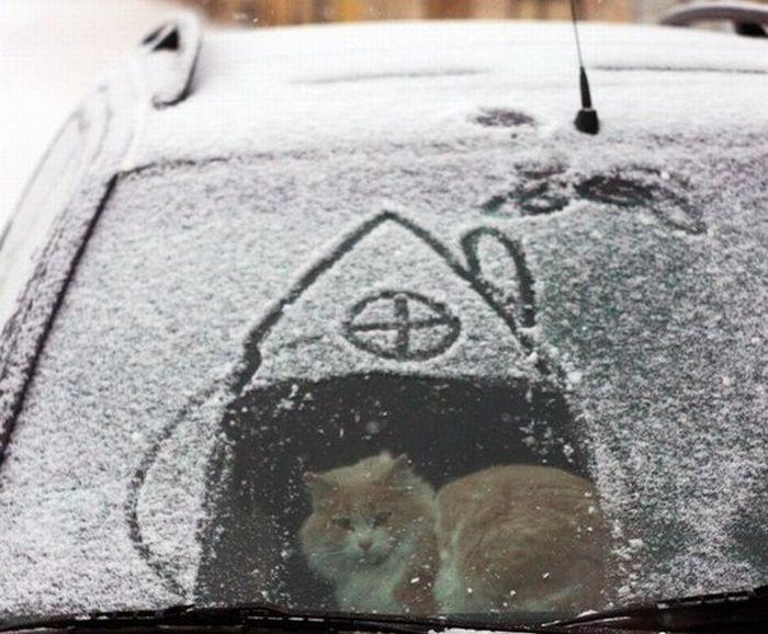 maison-chat-neige