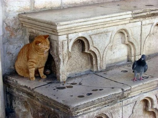 chat-vs-pigeon