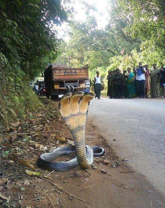serpent-3-tetes
