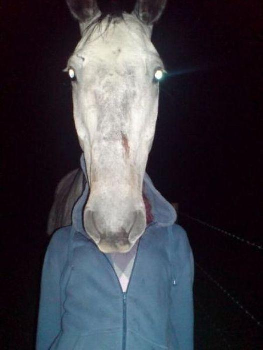 tete-cheval