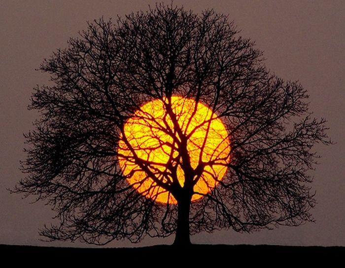 soleil-rouge-derriere-arbre