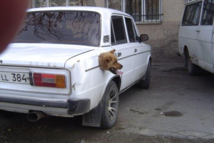 tete-chien-reservoir-voiture