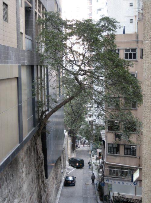 arbre-pousse-horizontale
