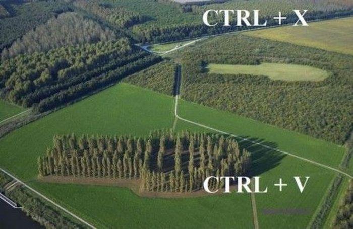 arbres-deplaces-ctrlx-ctrlv