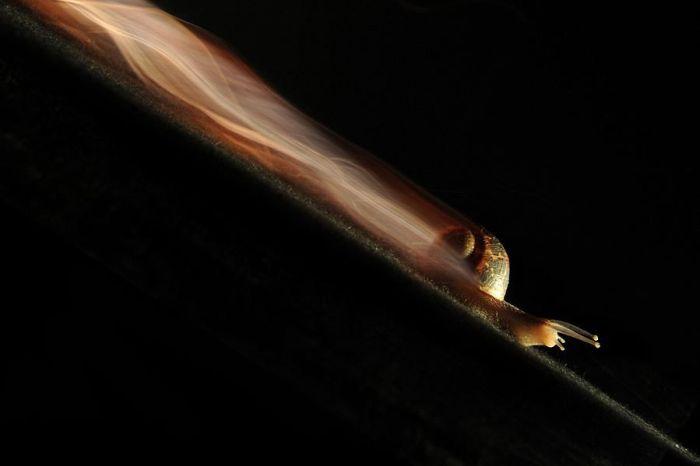 escargot-rapide