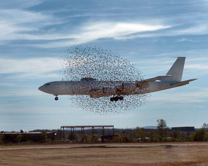 avion-entoure-oiseaux