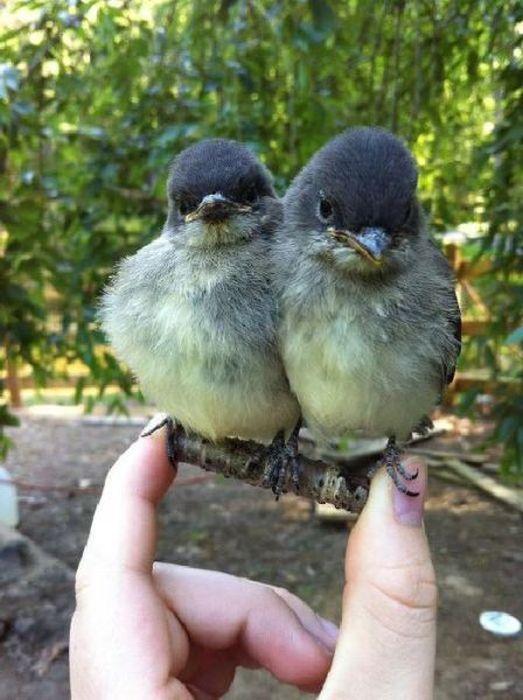 deux-oiseaux-petit-bout-bois