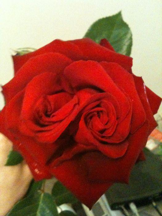 deux-roses-une