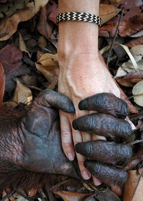 singe-qui-tient-main-dun-humain