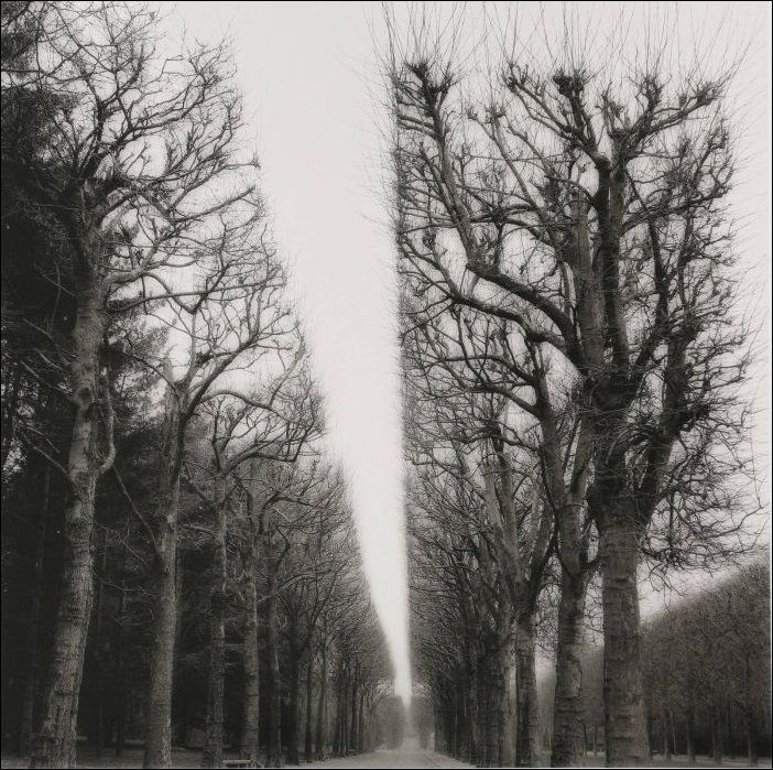 arbres-bien-coupes