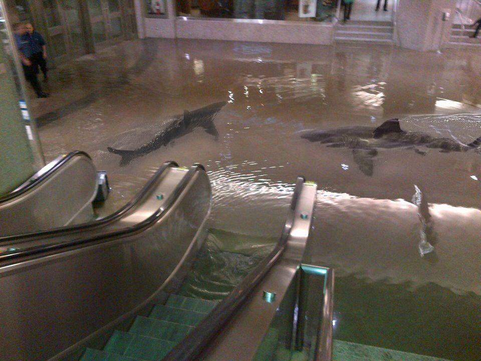 des-requins-supermarche-apres-une-inondation