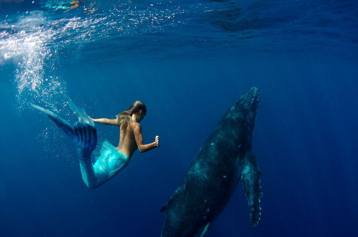 sirene-rencontre-baleine