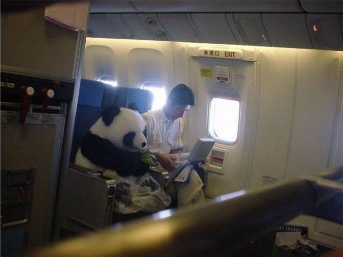 panda-voyage-avion