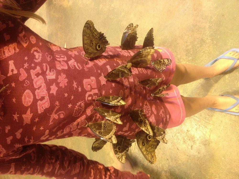 attirer-les-papillons